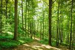 Hutan2