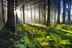 Hutan8